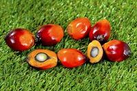 BIO Olej palmowy czerwony 250 ml