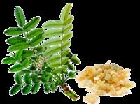 Kadzidłowiec indyjski ekstrakt (Boswellia serrata) - 180 tabletek